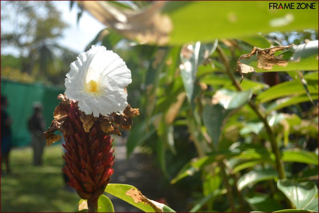 Flora Panama